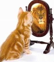 gatto_leone