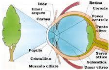 immagine-retinica